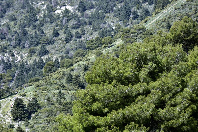 cem-pinsapo-trail-rallyes-escalada-madrid-2016-04