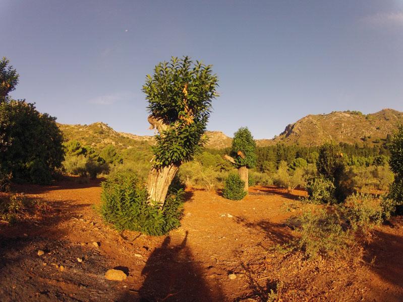 ruta-cem-refugio-juanar-concha-31