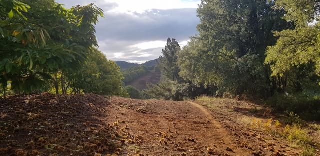 carreras-por-montanas-gran-vuelta-al-valle -del-genal-2018-12